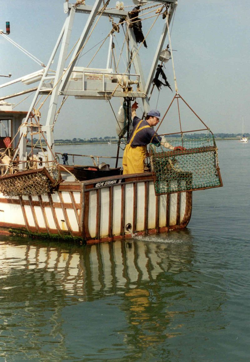 Oyster dredging in recent years