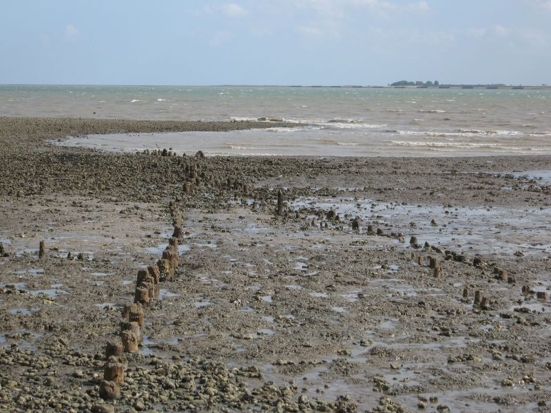 Posts in the mud about 200 yds East of Seaview Avenue, West Mersea, visible at low tide. They are believed by some, but not all, to be an Anglo-Saxon fish weir or fish traps.