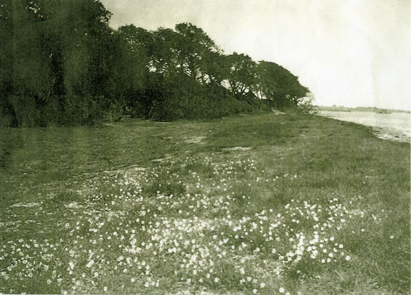 Bowling Green below Cudmore Grove, East Mersea