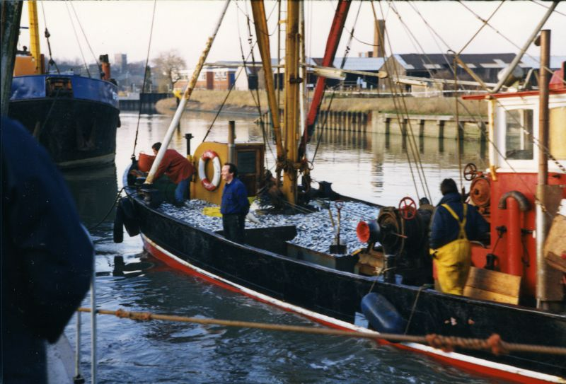 Landing sprats at Colchester Hythe. CK134 DIANA. 
