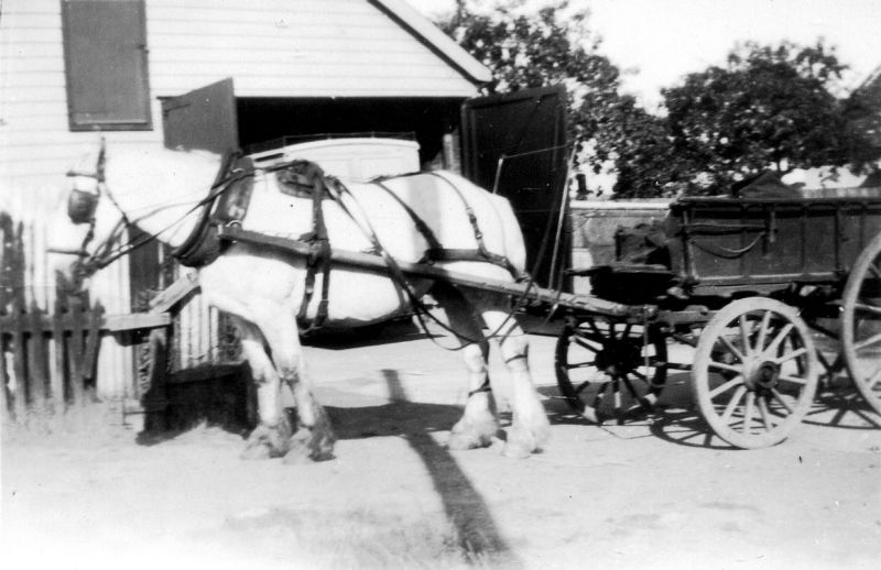 Munson Cooke's cart horse Gypsy
