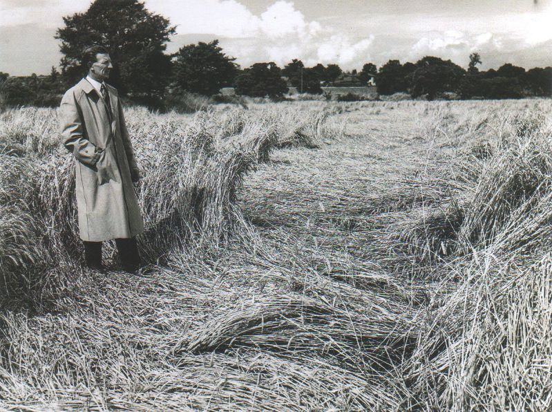 Stephen Wooldridge surveying damaged crops at Kemps Farm