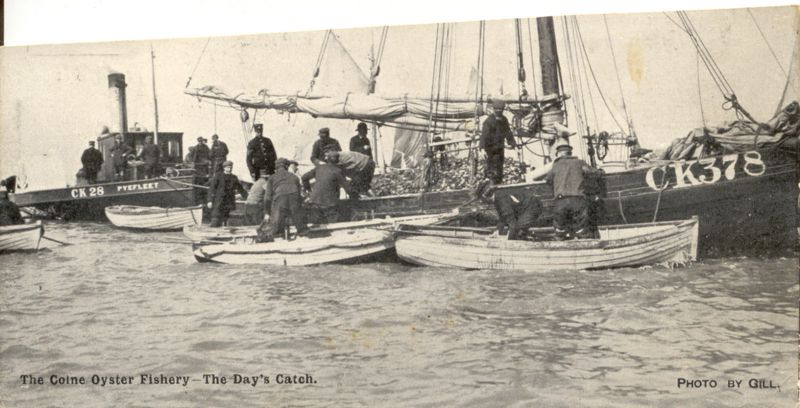 Unloading smacks. Colne Oyster Fishery. Half Penny Stamp. No date but stamp which is nearest to the colour was used between 1902 to 1912. 