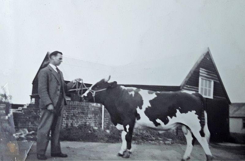 Victor Gray on New Hall Farm. The bull was Gay Gordon. 