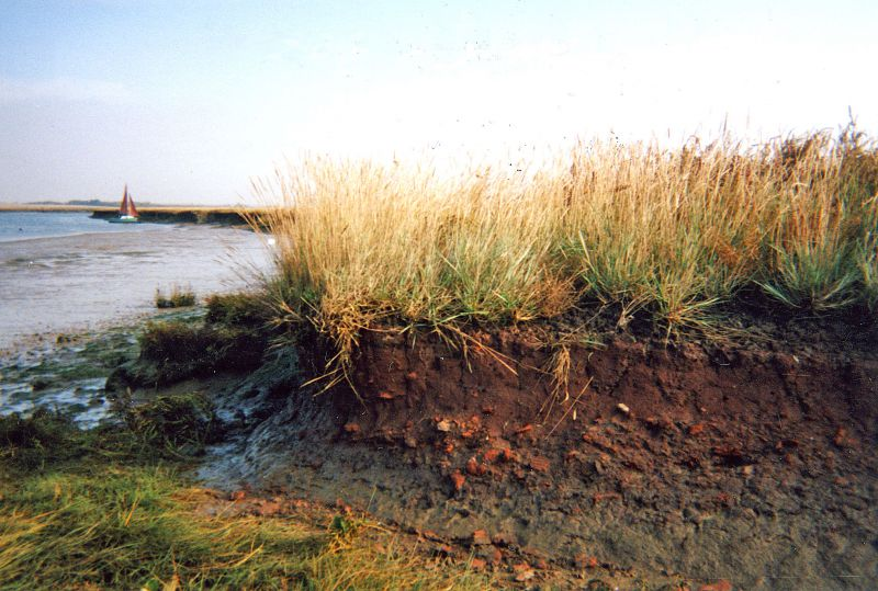 Red Hill, Thirslet Creek, River Blackwater. One of many in the area. The soil is a distinctive red colour, with pieces of broken pottery embedded in it. 
