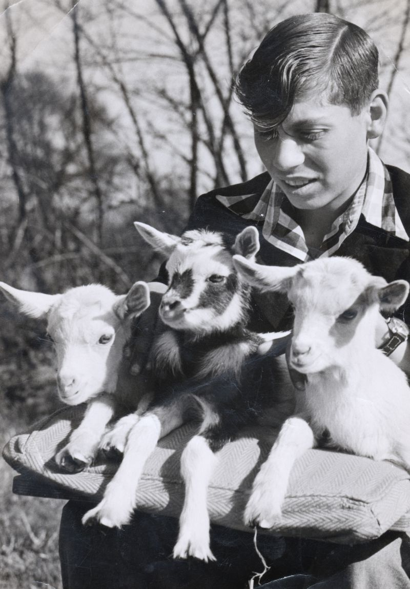 Geoff Wyncoll's brother David with 3 kid goats. Geoff says: