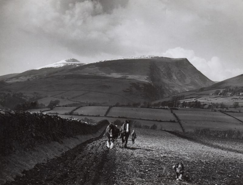 Skiddaw. Horse ploughing 
