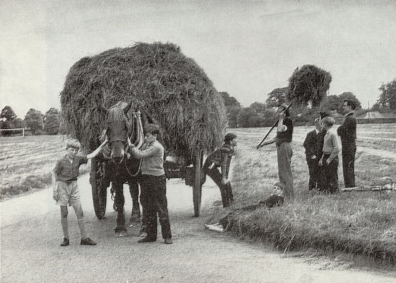 Carting the hay harvest off Great Bentley green. The village boys take a great interest in the work, particularly as horses are so seldom used nowadays.