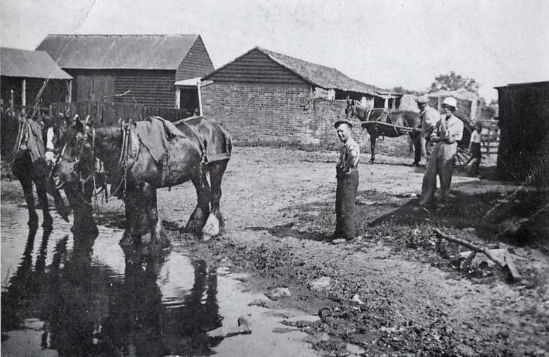 Watering Horses. Three horses take a well-earned drink at the pond in front of Tollesbury Hall Farm. The central building is the cart lodge, in front of which a small stack of hay can be seen. A horse and tumbrel (a square two-wheeled tip-up cart) await their next turn of duty.