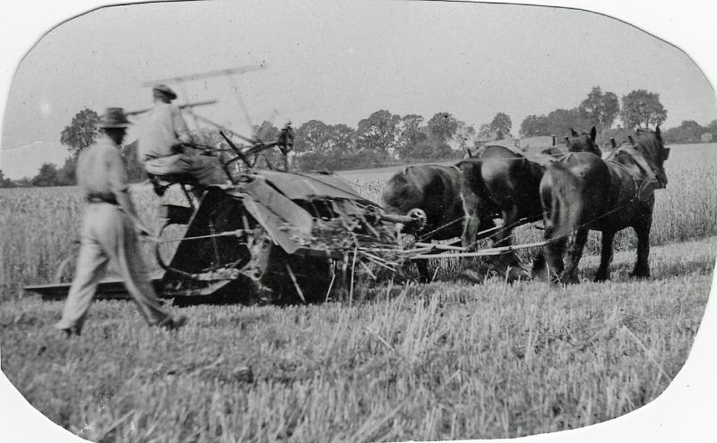 Will and Phil Nicholas harvesting with the binder and horses, probably in the 1930s. The Nicholas family were at Malting Farm. 