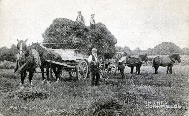 In the Cornfields - farming at the beginning of the 20th century