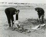 100. ID PP4_SKL_007 Police Sergeant Tony Butcher and Police Constable David Passfield recovering a skeleton found on the beach by Coopers Beach, East Mersea. The old chalets at ...